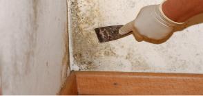 Грибковое поражение бетона заказать бетон уфа цена